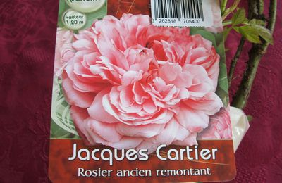 Rosier Jacques Cartier