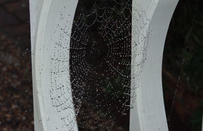 """Entre ombre et lumière: """"Toiles d'araignée"""""""