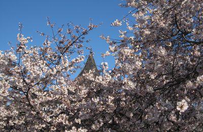 Le printemps à Washington
