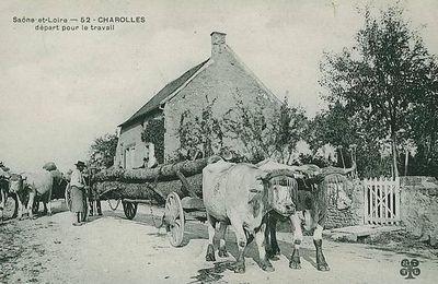 Transport de grumes à Charolles