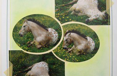 Drôle de cheval !!!!