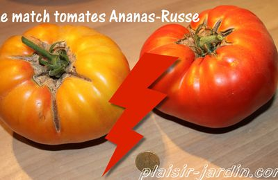 Le match tomate ananas contre tomate russe