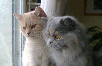 Verlaine et Bridget