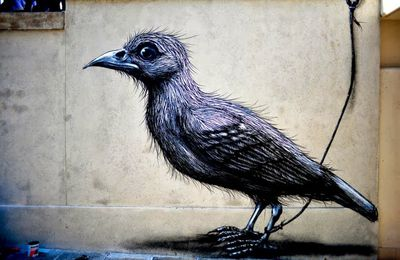 Roa new piece in Lecco, Italy