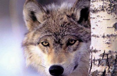 Stop Anti-Wildlife Legislation in the US Senate