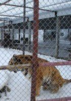 Please Help Shut Down Guzoo Animal Farm / Canada