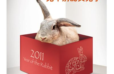 Rabbits during Chinese New Year : a misery ! and not only: