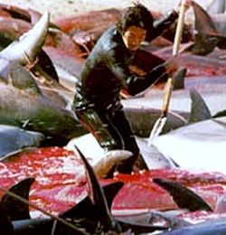 URGENT pour les dauphins à TAIJI , For the dolphins in TAIJI