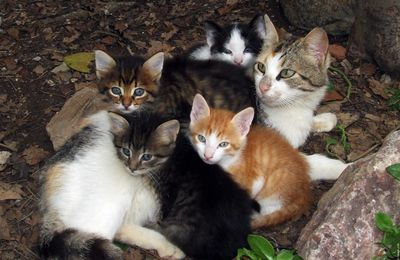 Le chat fait partie des membres du foyer