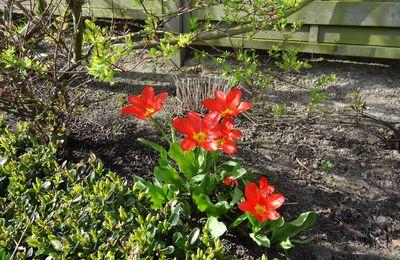 Les premières fleurs du printemps