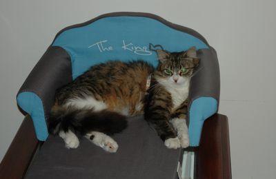 Les animaux et les hommes!! Une chatte sur canapé!!