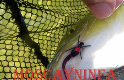 Capturas de pesca: Nº 1