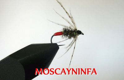 Red tag Soft Hackle