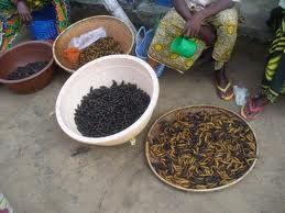 """Recette du Congo: chenilles """"bminzo"""" aux champignons noirs"""
