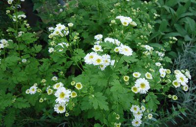 Des plantes au service de la beauté