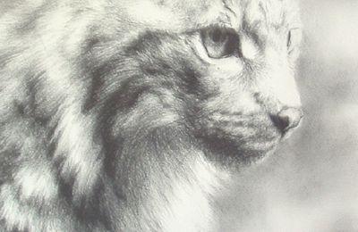 # Le Lynx : un Guide pour la Divination #