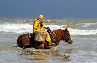 Les pêcheurs de crevettes à cheval d'Oostduinkerke