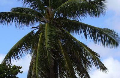Les plumes des palmiers.