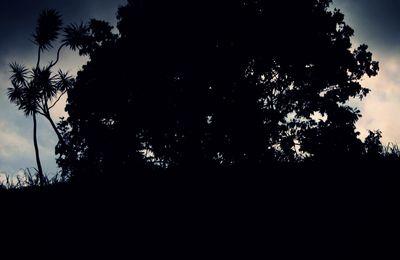 Insomnie d'oiseau de nuit...