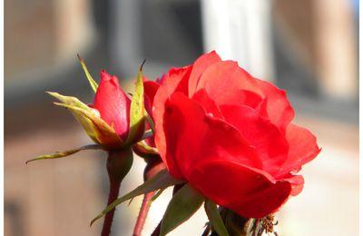 Patrimoine fleuri