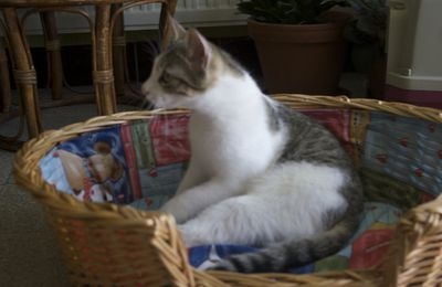 Vacances et animaux de compagnie: contre les abandons, faire garder son animal ... (vidéo)