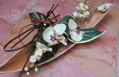Orchidées et écorce de cocotier