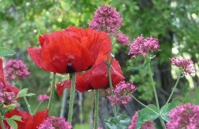 JOURNEES DU PATRIMOINE notre jardin sera ouvert