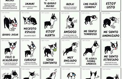 Manual de instrucciones de un perro.