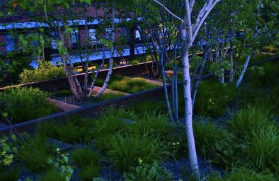 High Line New York: Les jardins suspendus