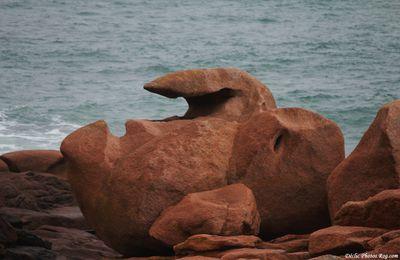 Sentinelles de l'océan