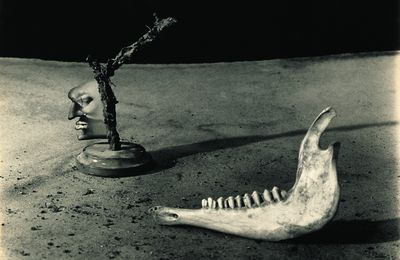 "Expo Photographie Contemporaine: Joan FONTCUBERTA ""CAMOUFLAGES"""
