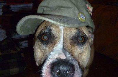 Chien à casquette, chien à... casquette !!! Le pêle-mêle.