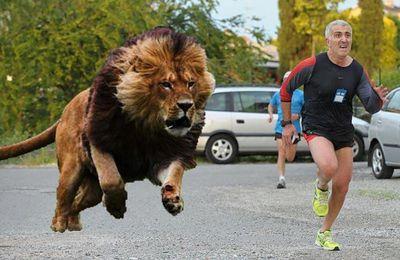 La Maratona per gli Amatori. Come prepararla e affrontarla (Lara La Pera e Attilio Licciardi). Una premessa: maratona che passione!