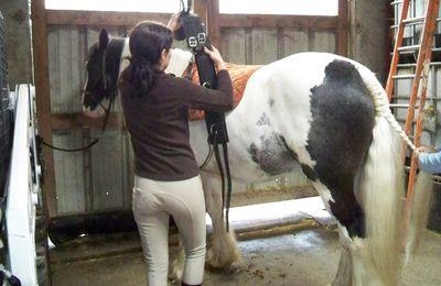 Rencontre avec Tagada, cheval de spectacle et d'amazone