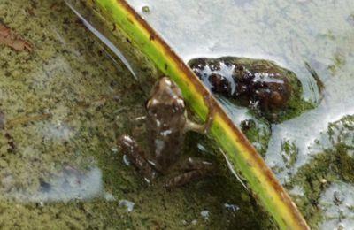 Remise de liberté à ma grenouille et mes crapauds