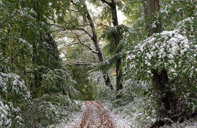 1ere neige !