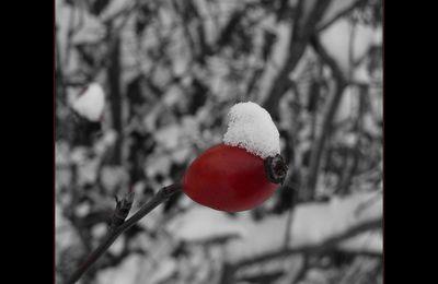 Du rouge et du blanc... et du noir..