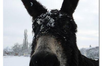 Mon âne...