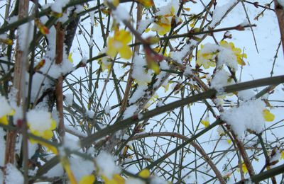 La fleur du mois, janvier.