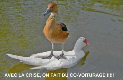 Le p'tit jeu...les canards...