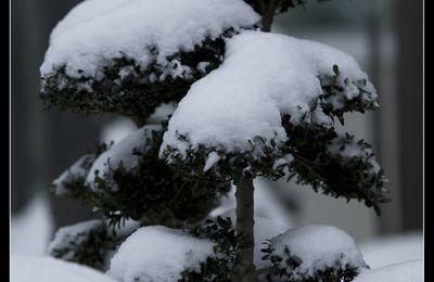 Florilège en neige....