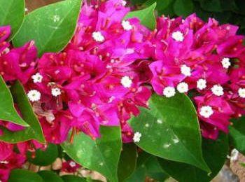 Piante in vaso: manutenzione di marzo