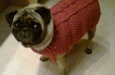 Jersey súper simple para perros