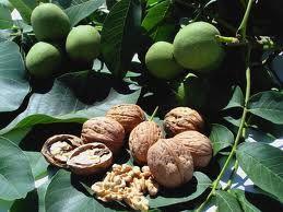 Benefici del mangiare noci
