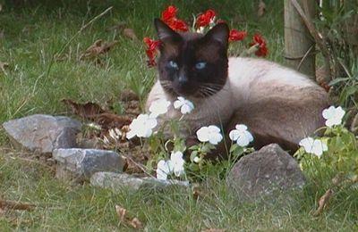 Les Idées reçues sur les chats, par Marie- Hélène part4