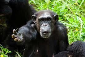 Gli Stati Uniti bloccano i fondi per la sperimentazione animale sulle scimmie