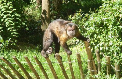 Le zoo d'Amnéville (57)