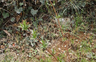 Eclosion discrète et prudente de la nature au jardin