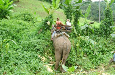 Thaïlande 12 # Un trekk au nord de Chiang Mai