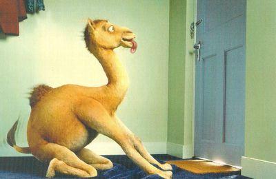 carte postale Camel Acte 13